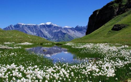 Как получить ВНЖ в Швейцарии